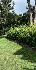 Shrub-Pruning-and-Trimming