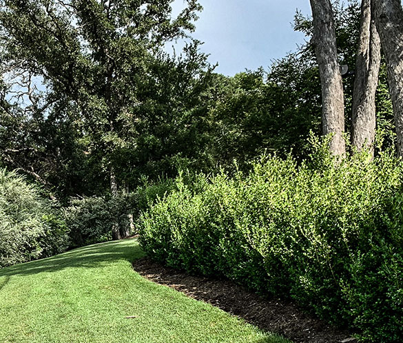 Shrub Pruning & Trimming Services in Waco, Texas - 254 Lawns