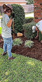 Mulch and Flower Bed Maintenance