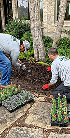 Annual and Perennial Plant Care
